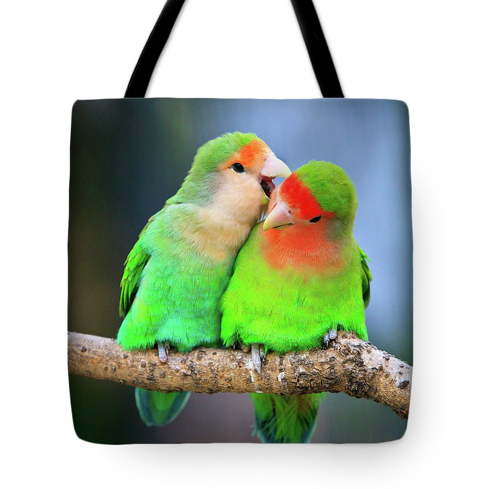 Togetherness Tote Bag featuring the photograph Two Peace-faced Lovebird by Feng Wei Photography
