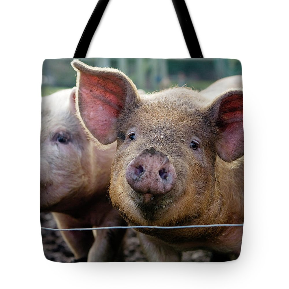 Pig Tote Bag featuring the photograph Two Pigs On Farm by Charity Burggraaf