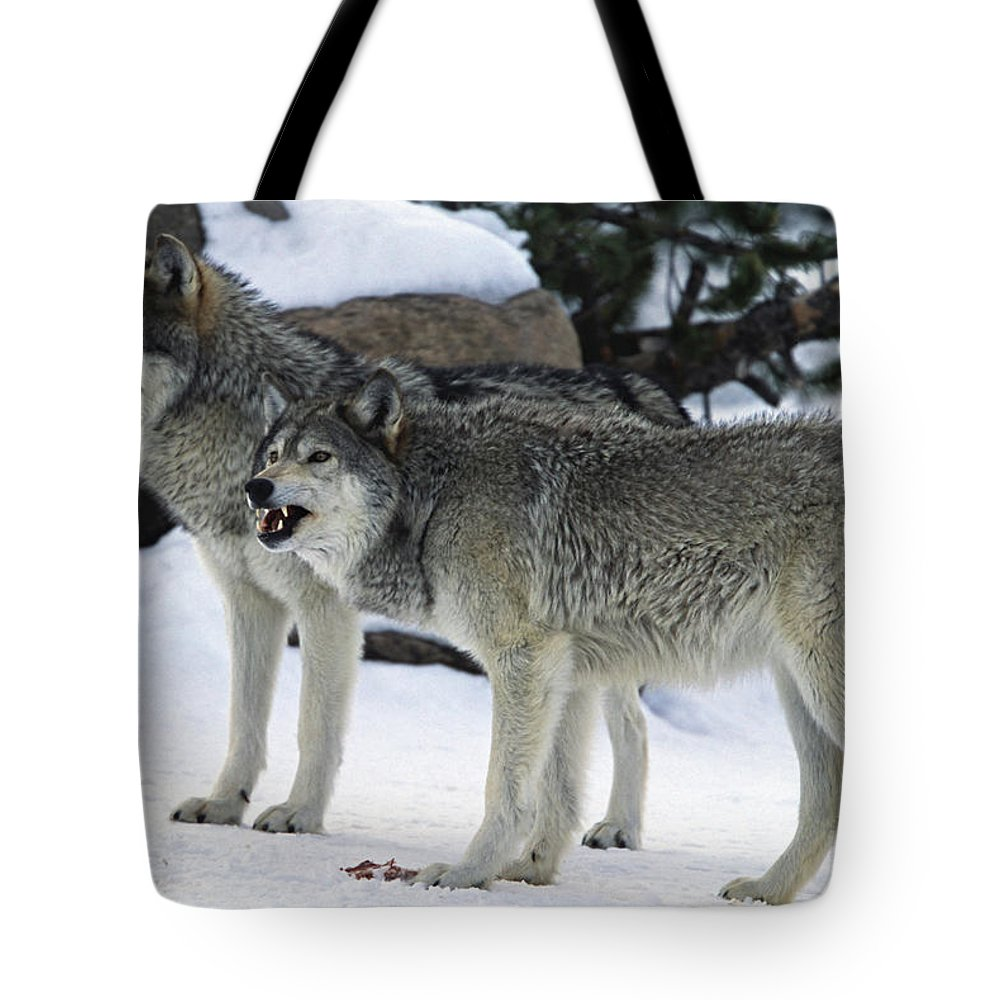 Snarling Tote Bag featuring the photograph Two Wolves by Judilen
