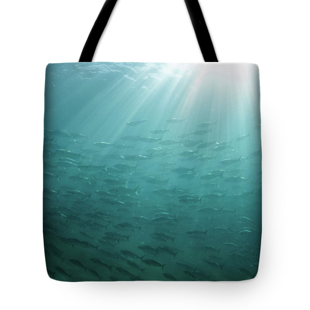 Freedom Tote Bag featuring the photograph Underwater Light by Mark Tipple