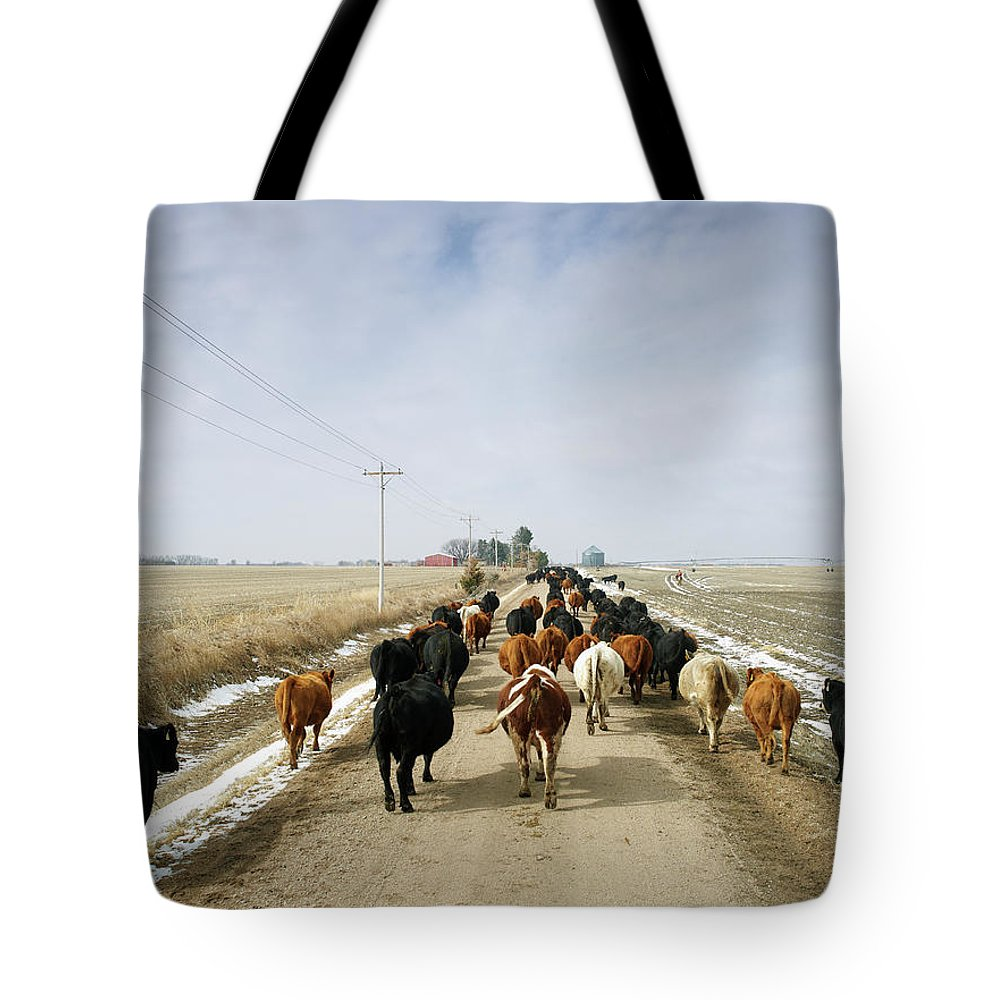 Cattle Drive Tote Bag featuring the photograph Usa, Nebraska, Great Plains, Herd Of by John Kelly
