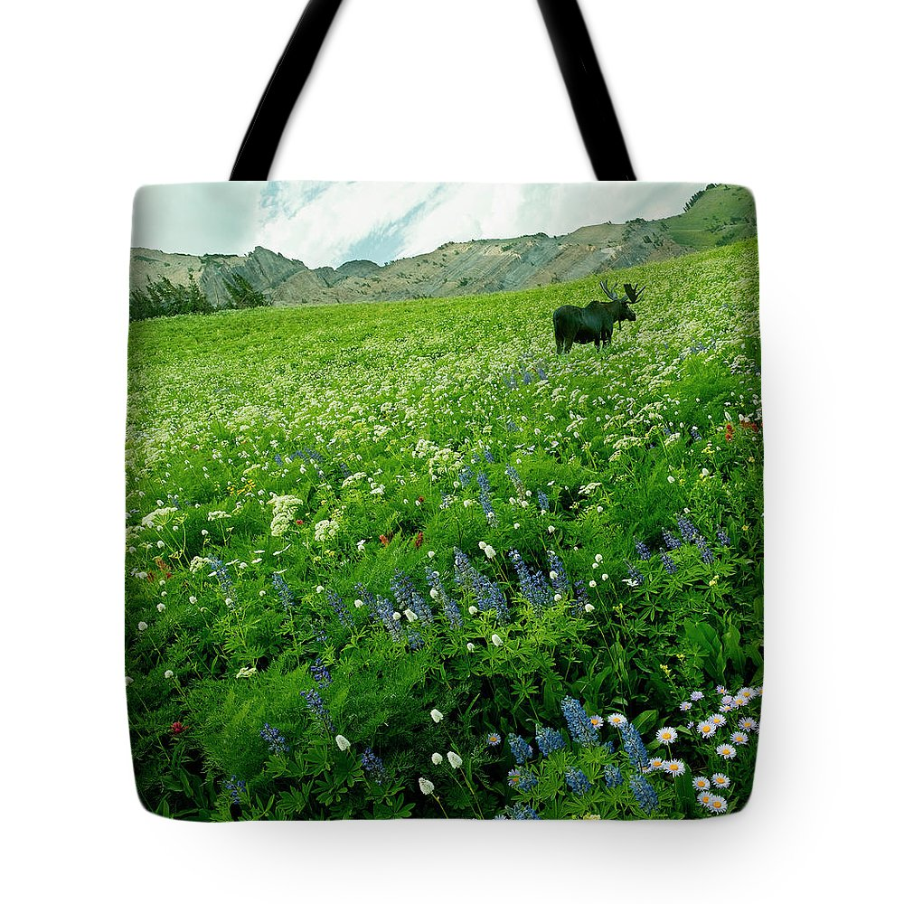 Non-urban Scene Tote Bag featuring the photograph Usa, Utah, Wasatch National Forest, Mt by John Wang