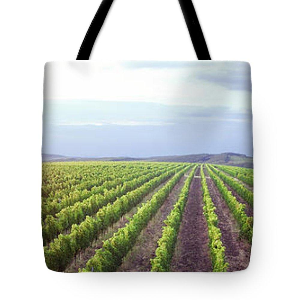 Scenics Tote Bag featuring the photograph Vineyard Panorama Sunrise by Malhrovitz