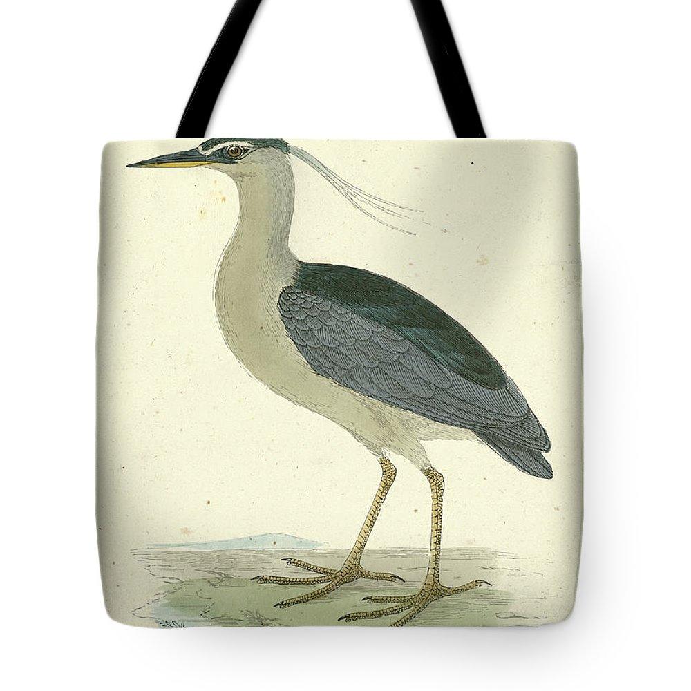 Night Heron Lifestyle Products