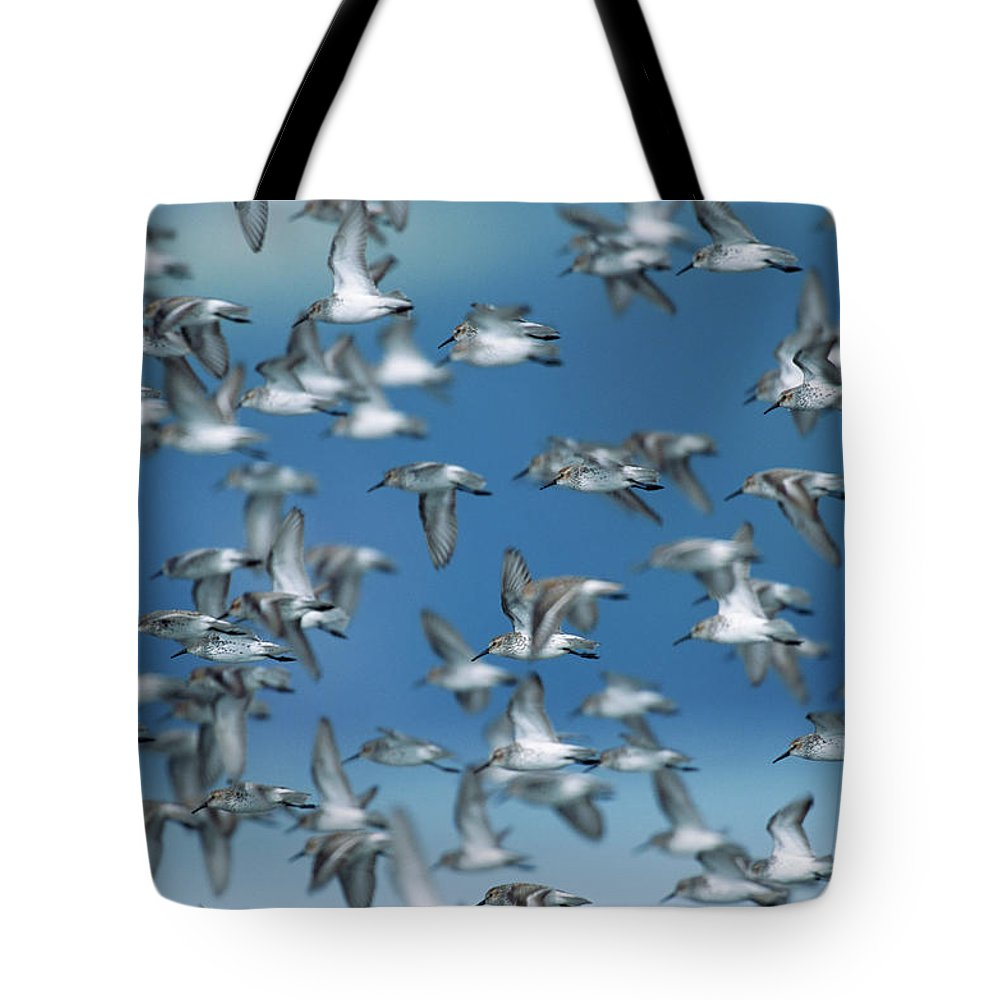 Animal Themes Tote Bag featuring the photograph Western Sandpipers Calidris Mauri by Eastcott Momatiuk
