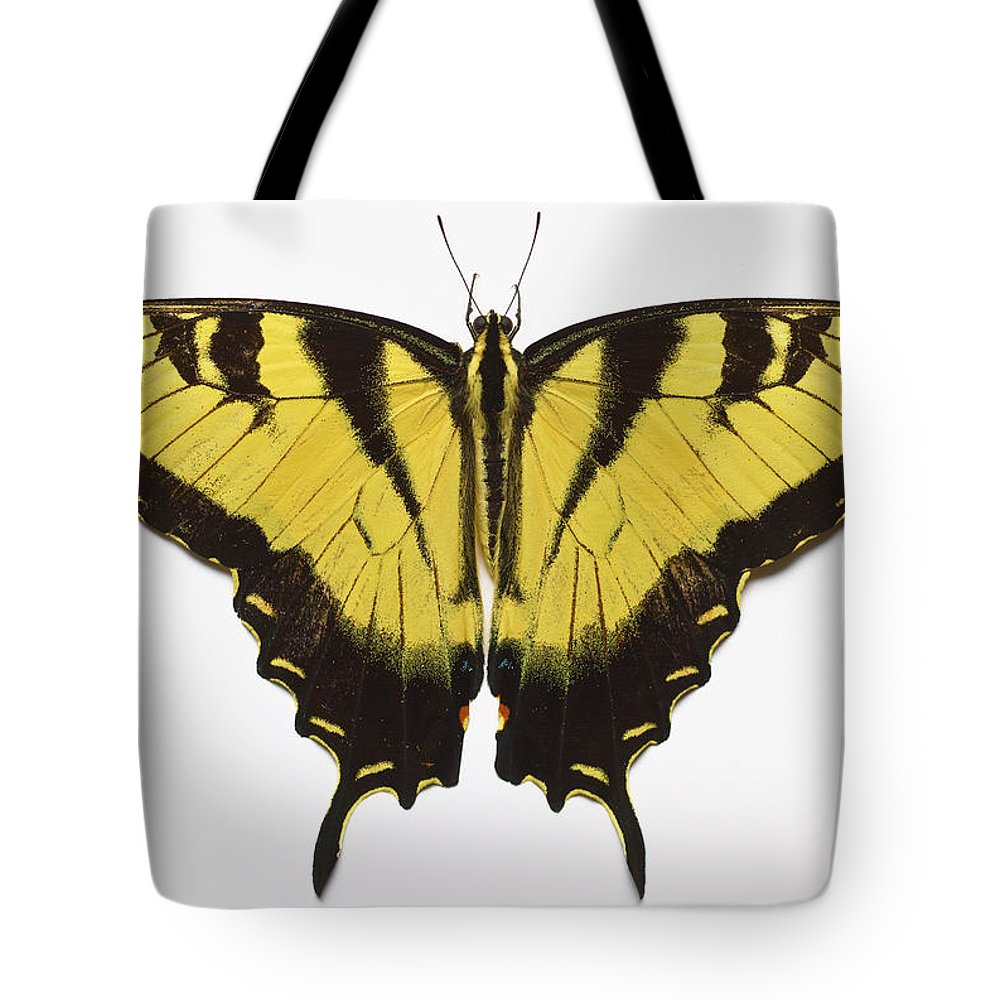 White Background Tote Bag featuring the photograph Western Tiger Swallowtail Butterfly by Don Farrall