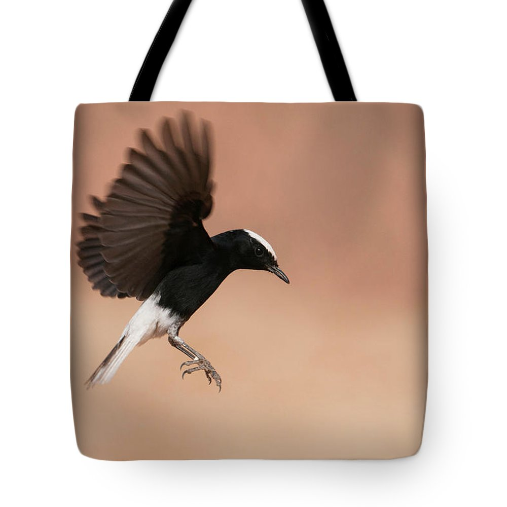 Eilat Tote Bag featuring the photograph White Crowned Wheatear by Dorit Bar-zakay