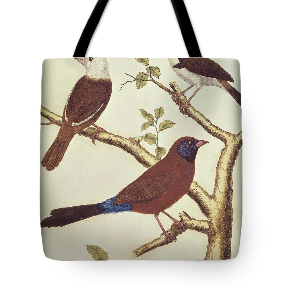 Bird Tote Bag featuring the painting White Headed Munia, Double Coloured Seed Eater And Violet Eared Waxbill by Francois Nicolas Martinet