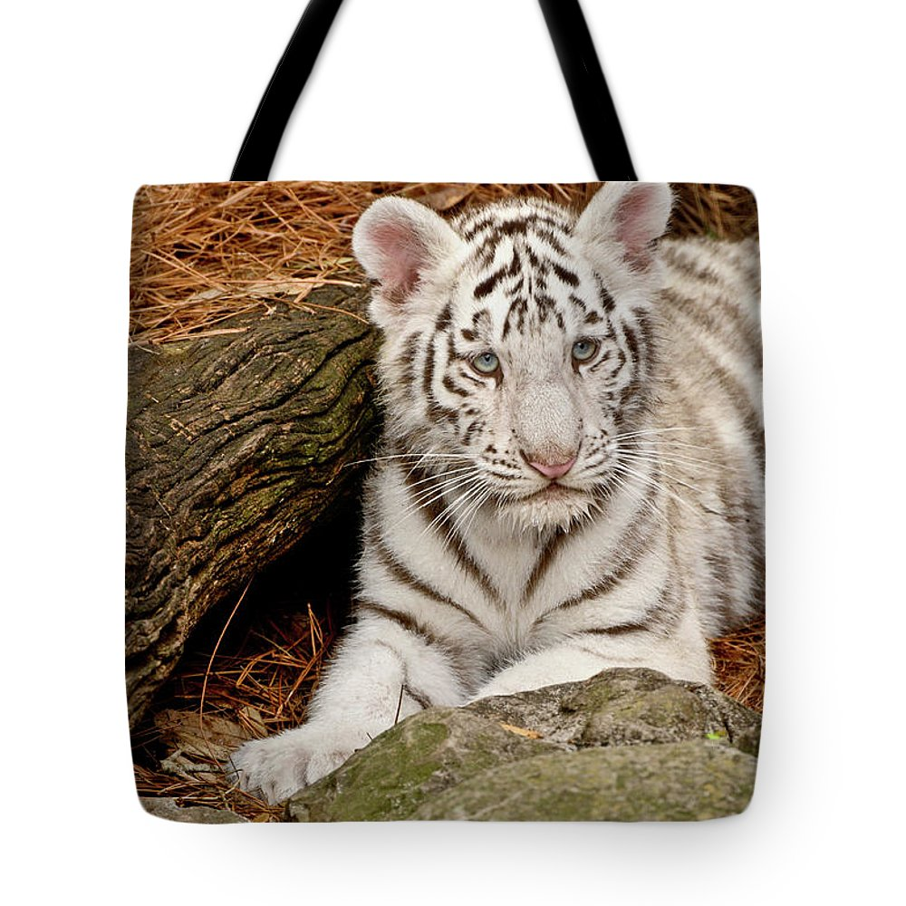 White Tiger Tote Bag featuring the photograph White Tiger Cub by Empphotography