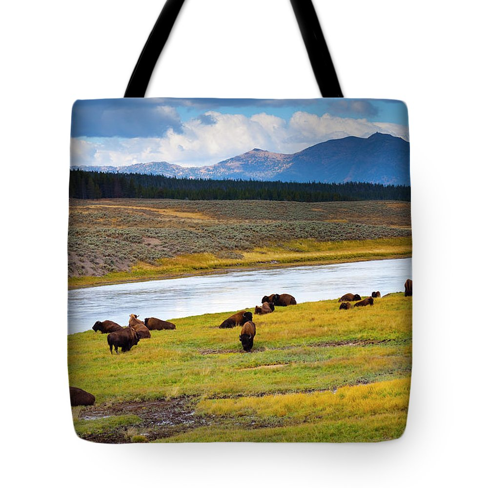Scenics Tote Bag featuring the photograph Wild Bison Roam Free Beneath Mountains by Jamesbrey