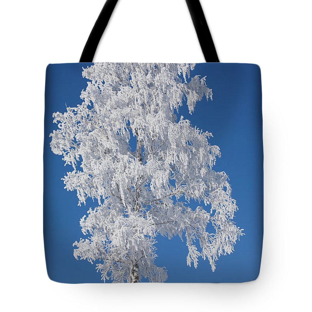 Scenics Tote Bag featuring the photograph Winter Birch Tree by Luvo