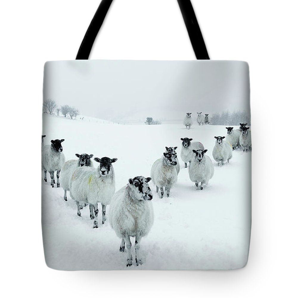 Cool Attitude Tote Bag featuring the photograph Winter Sheep V Formation by Motorider