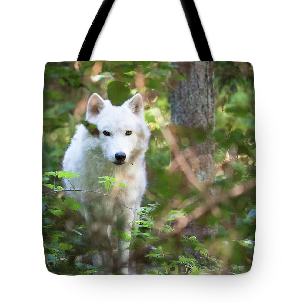 Wolf Tote Bag featuring the photograph Wolf by James Farrell