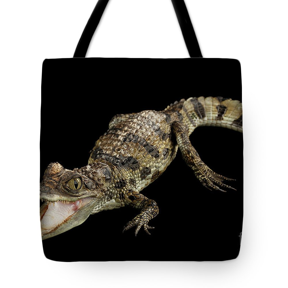 Crocodile Tote Bag featuring the photograph Young Cayman Crocodile, Reptile With Opened Mouth And Waved Tail Isolated On Black Background In Top by Sergey Taran