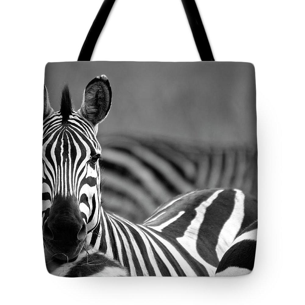 Plains Zebra Tote Bag featuring the photograph Zebra by Wldavies