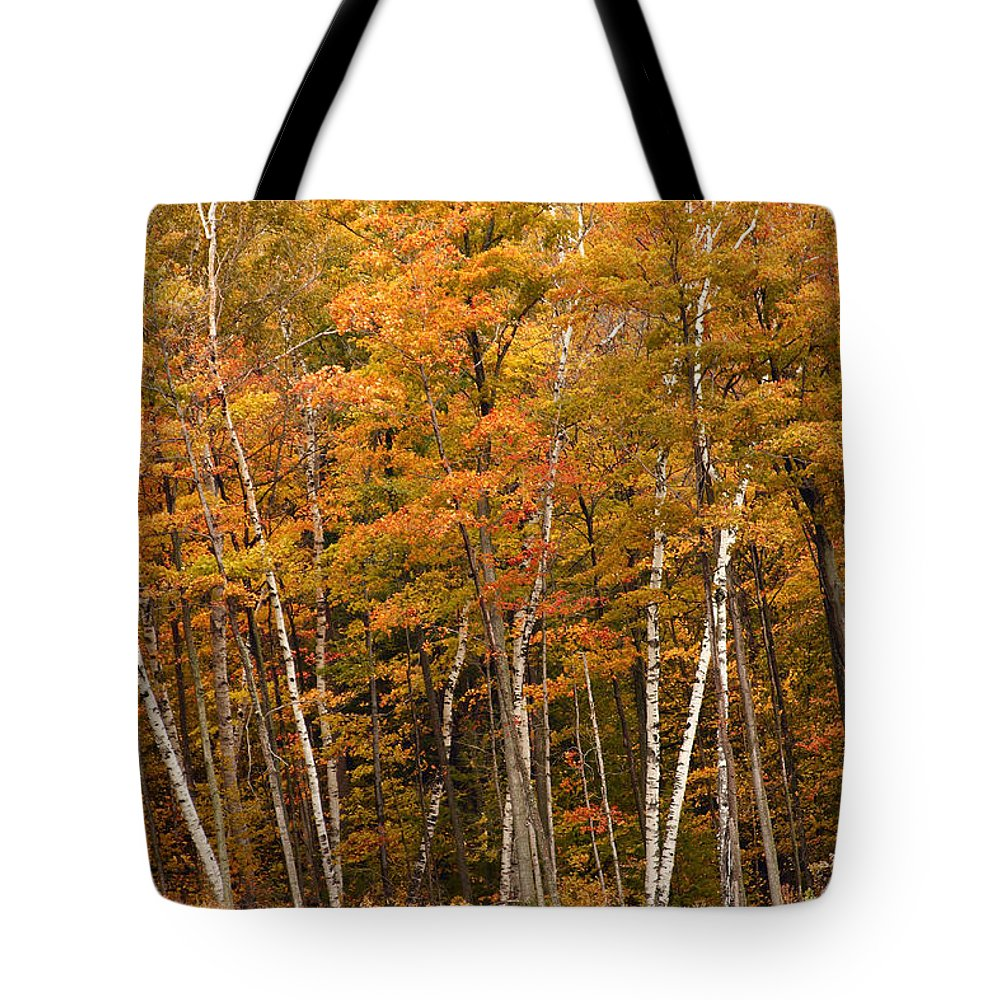 3scape Tote Bag featuring the photograph Autumn Glory by Adam Romanowicz