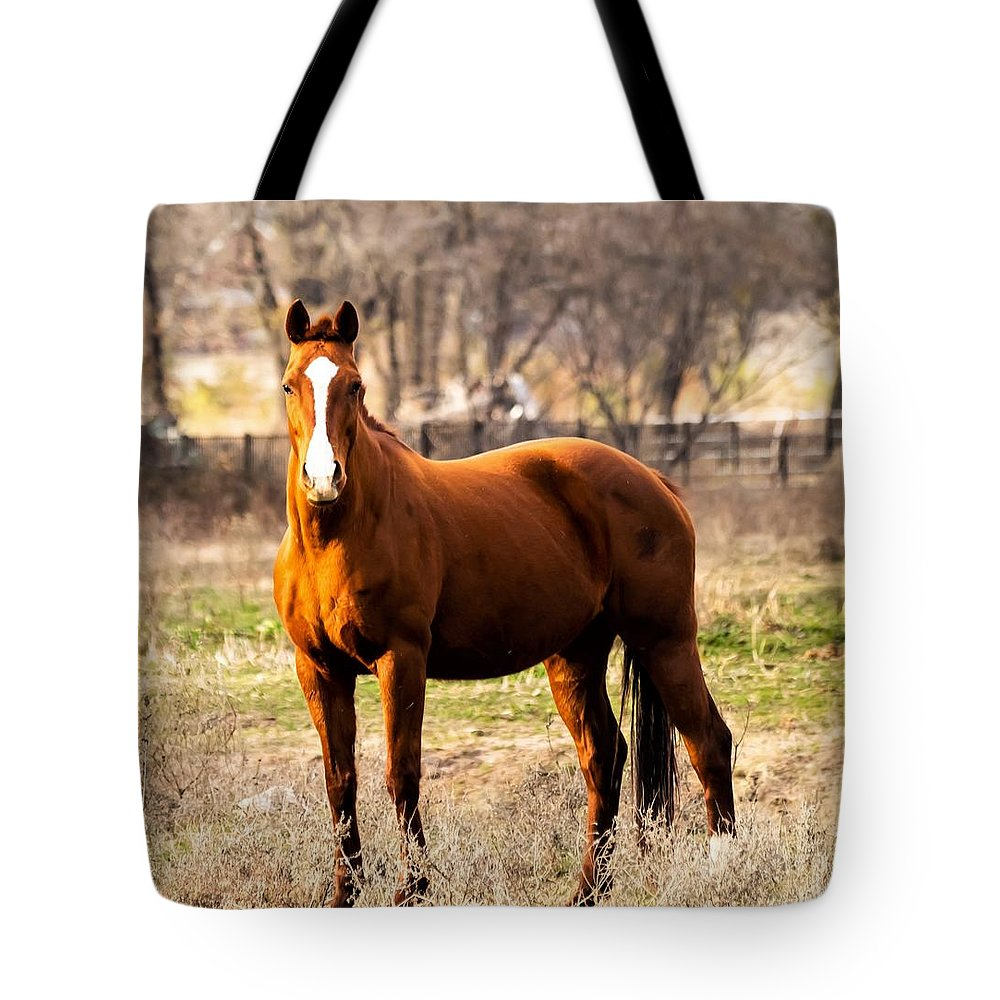 Horse Tote Bag featuring the photograph Bay Horse 2 by C Winslow Shafer