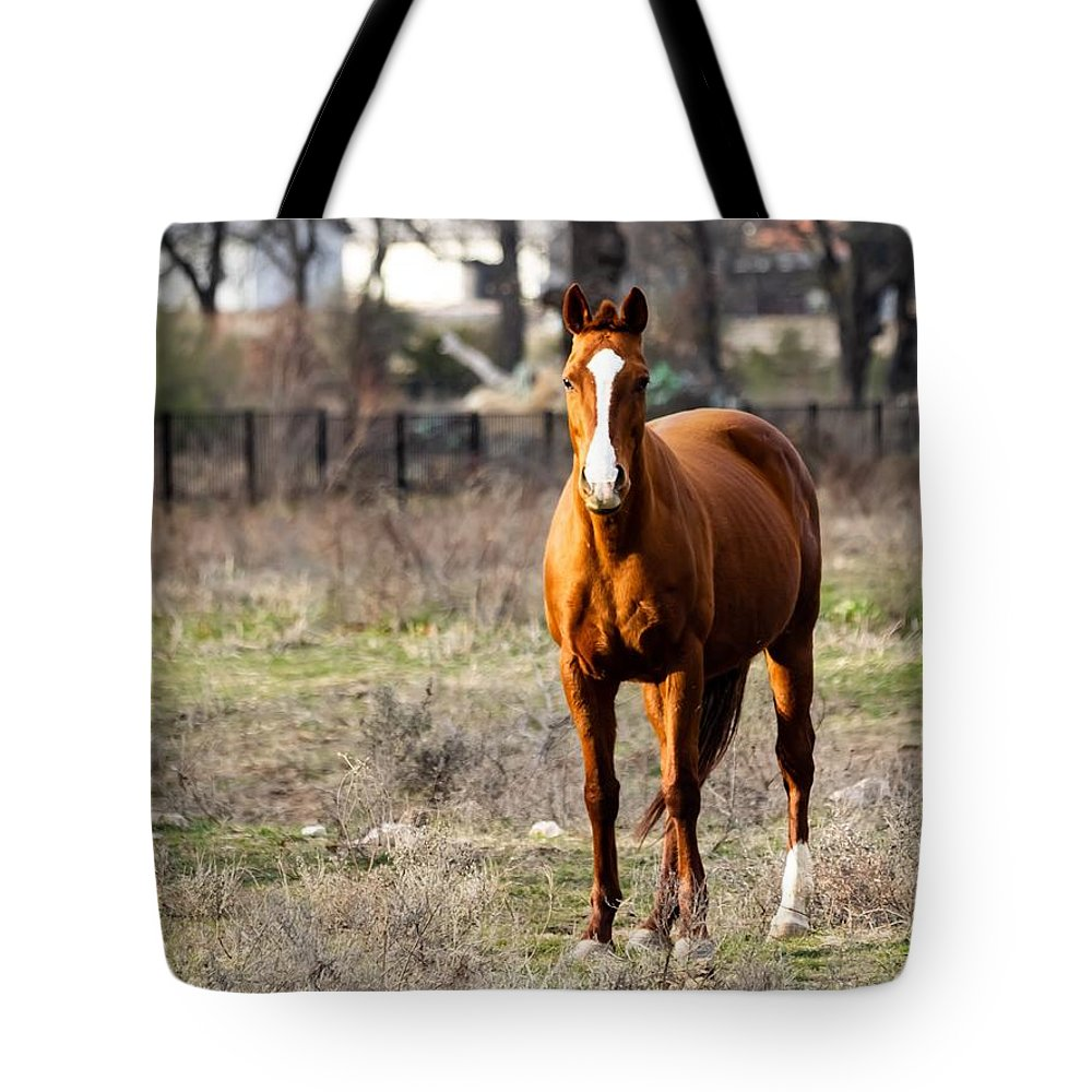 Horse Tote Bag featuring the photograph Bay Horse 3 by C Winslow Shafer