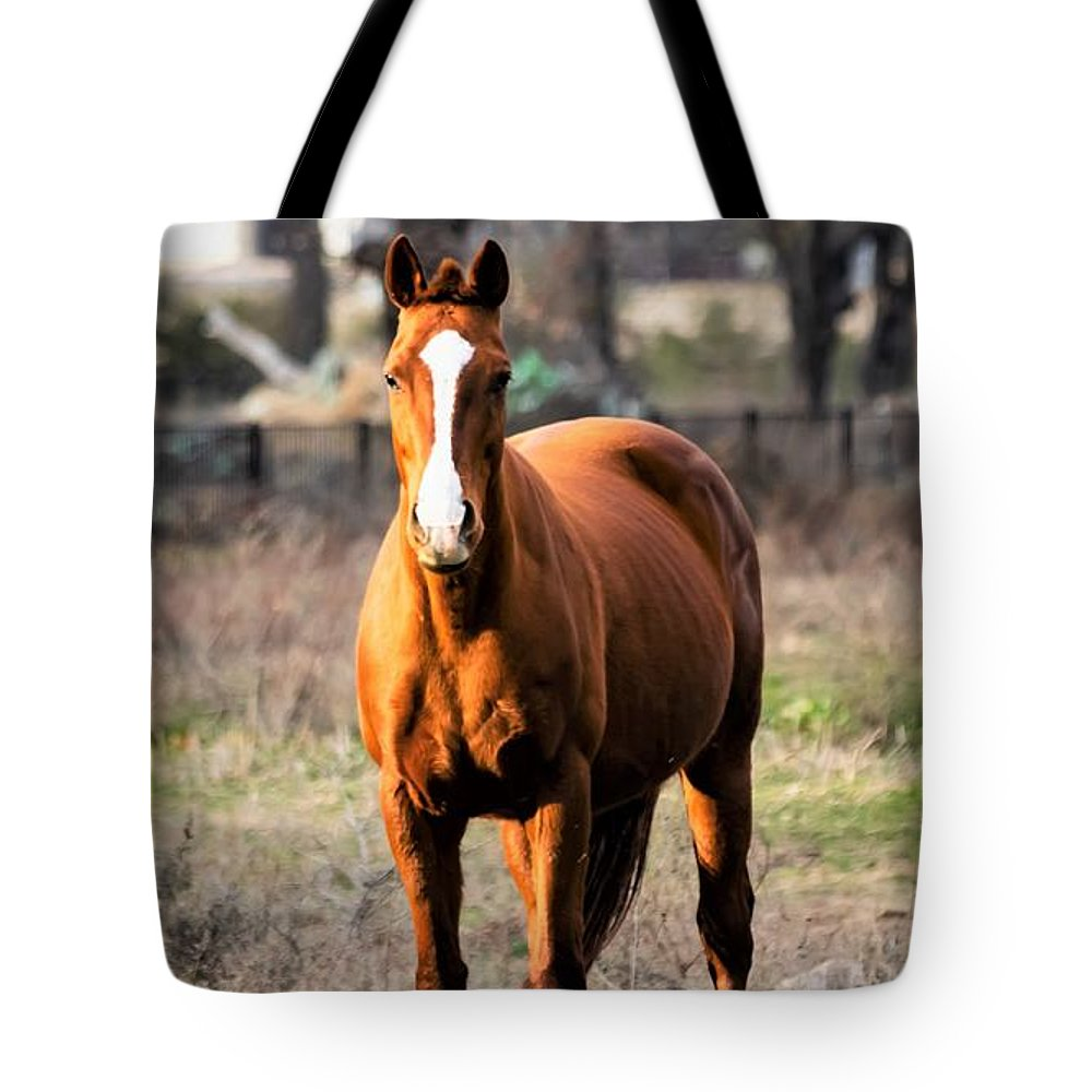 Horse Tote Bag featuring the photograph Bay Horse 4 by C Winslow Shafer