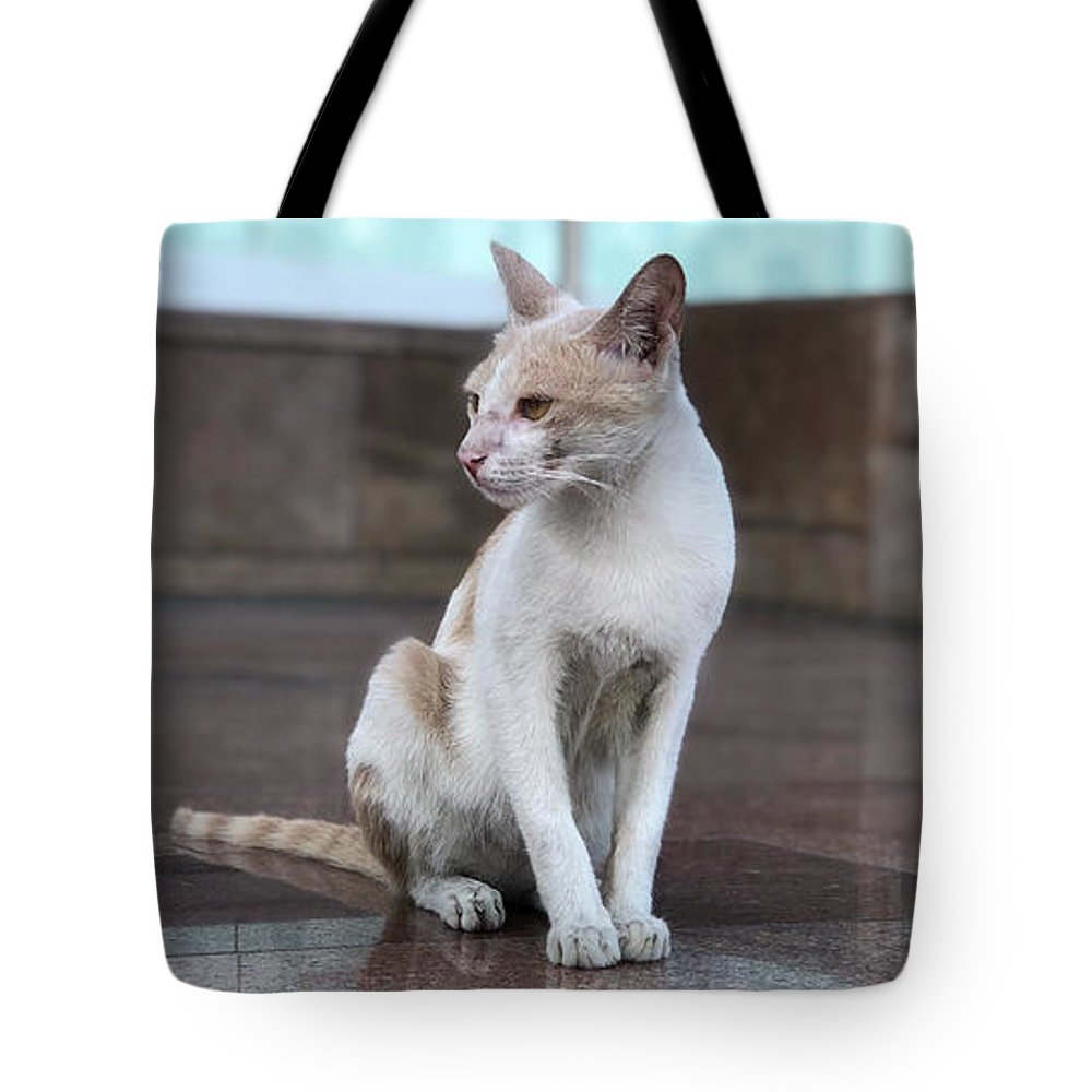 Wallpaper Tote Bag featuring the photograph Cat Sitting On Marble Floor by Prashant Dalal