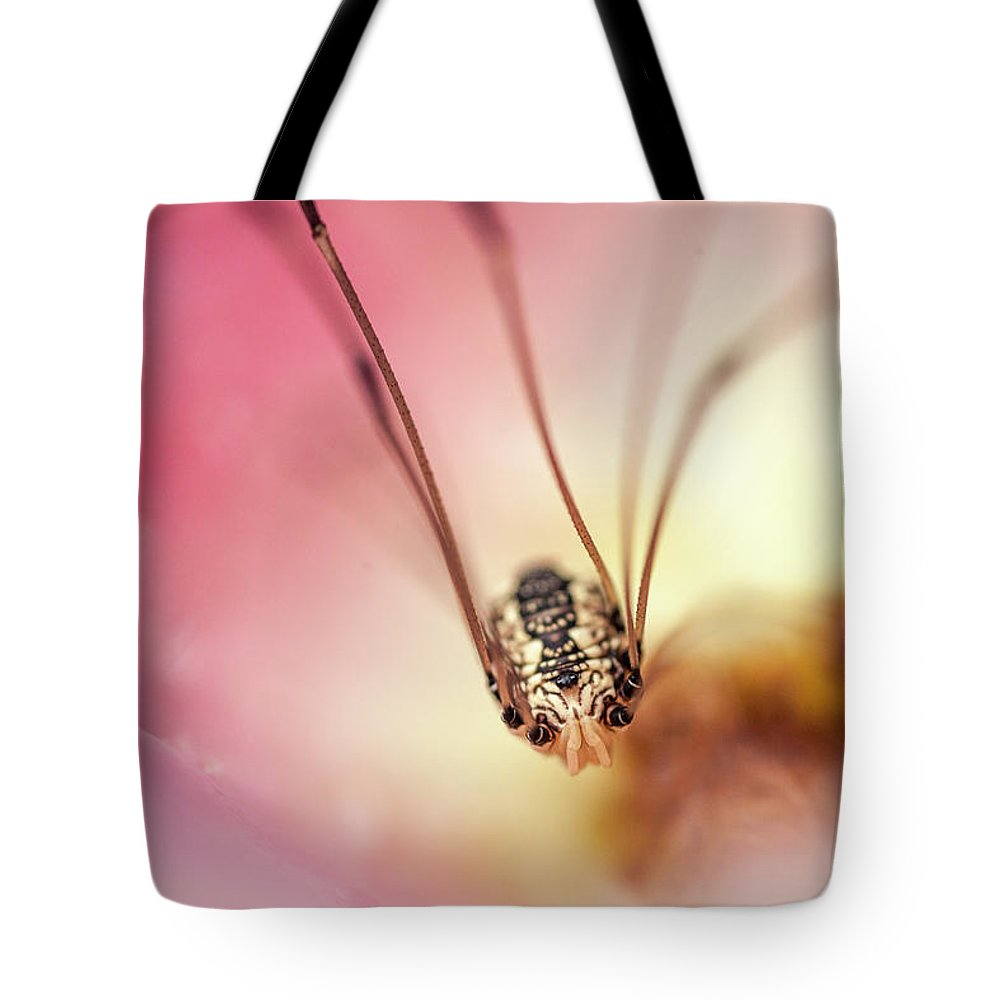 Daddy Longlegs Spider Tote Bag featuring the photograph Daddy Longlegs Spider by Trevor Slauenwhite