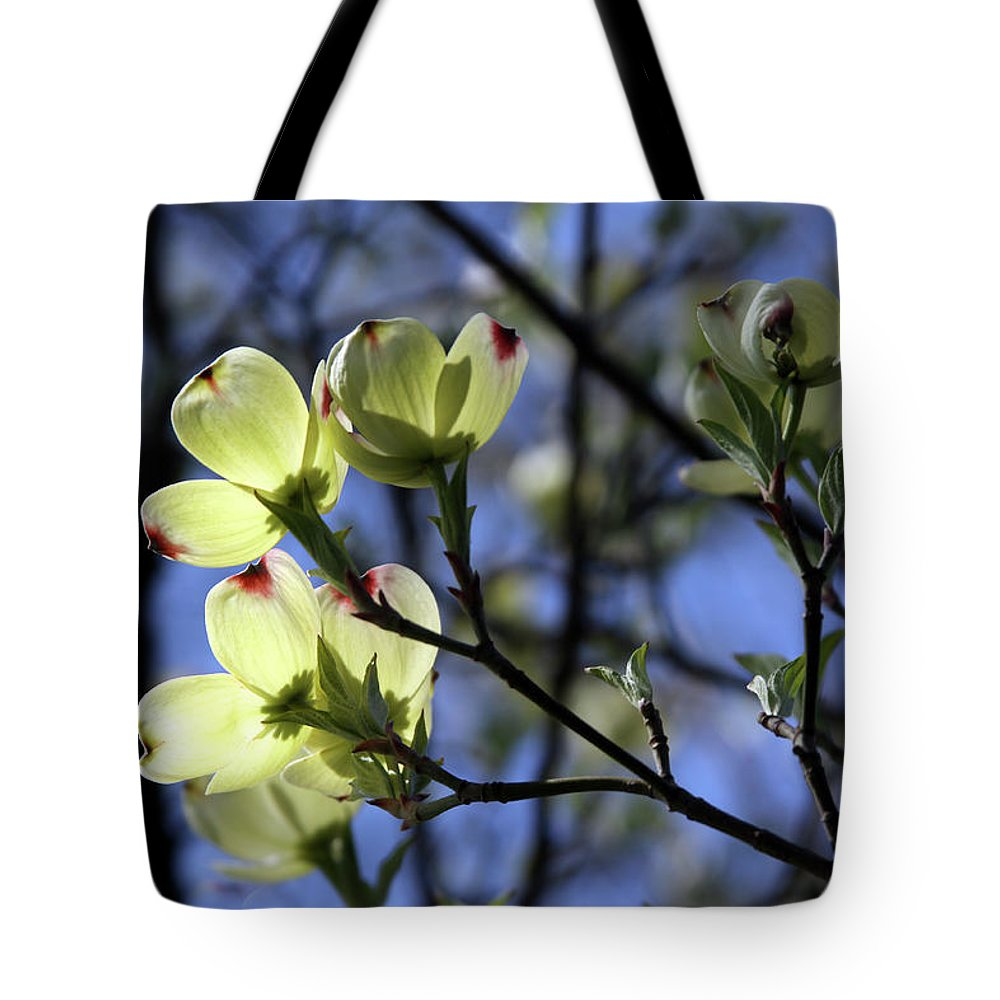 Dogwood Tree Tote Bag featuring the photograph Dogwood in Sunlight by John Lautermilch