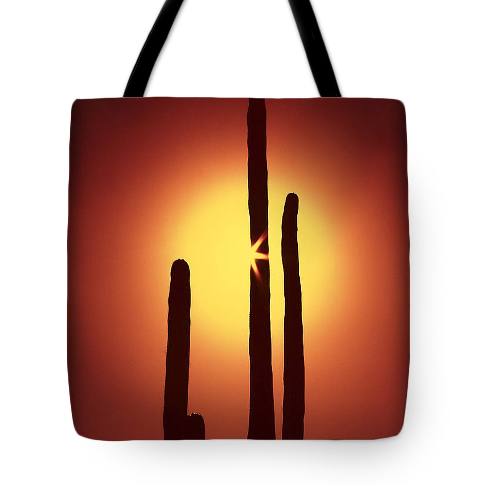 Sun Tote Bag featuring the photograph Encinitas Cactus by Andre Aleksis