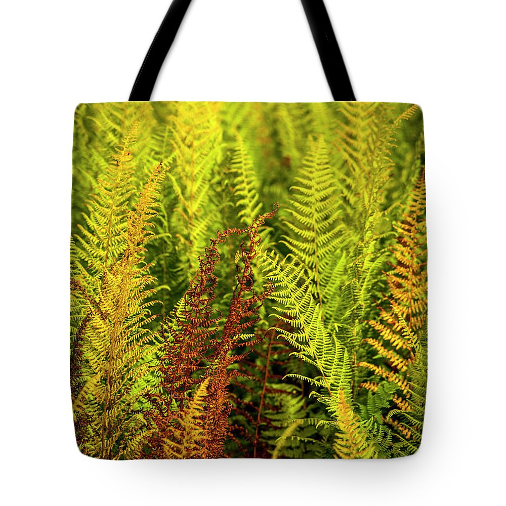 Ferns Tote Bag featuring the photograph Ferns by Trevor Slauenwhite
