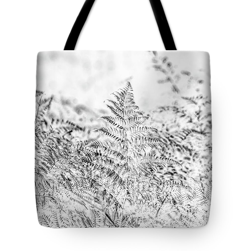 Forest Tote Bag featuring the photograph Ferny Grove by Jorgo Photography - Wall Art Gallery