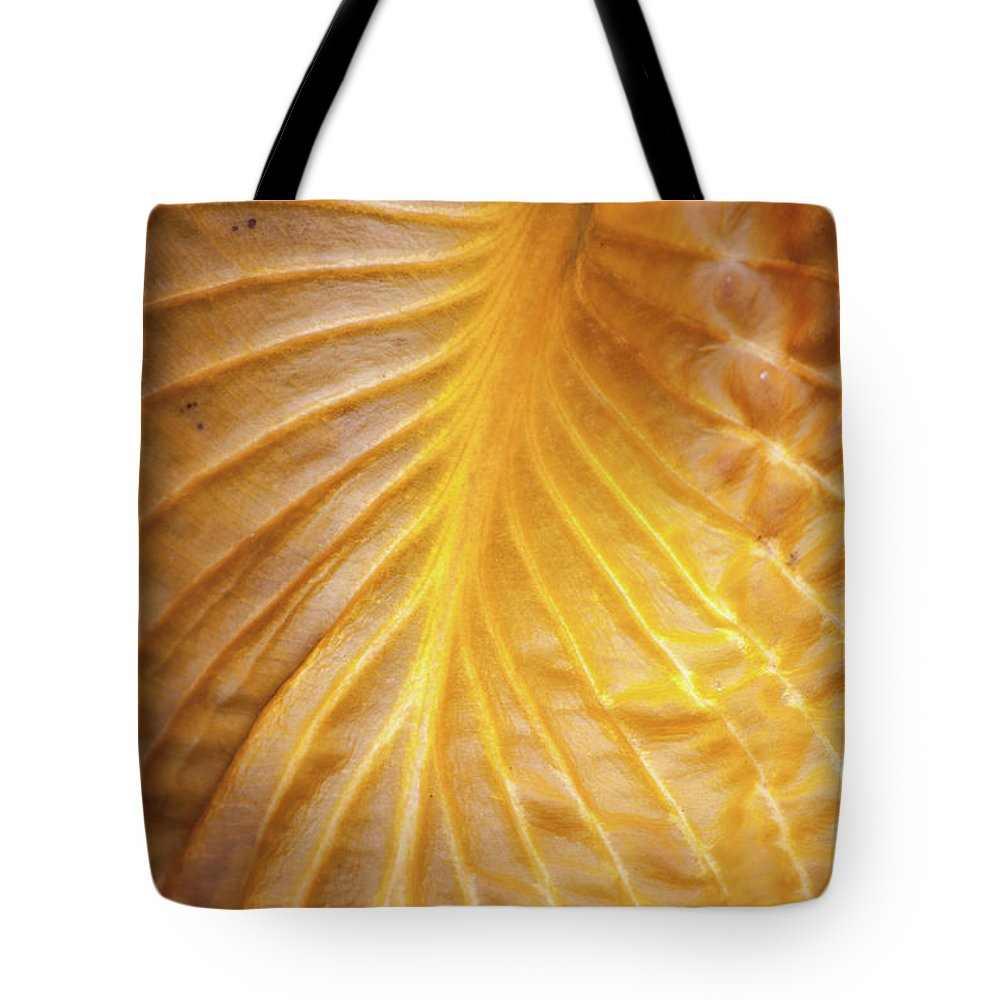 Hosta Tote Bag featuring the photograph Golden Hosta Leaf by Trevor Slauenwhite