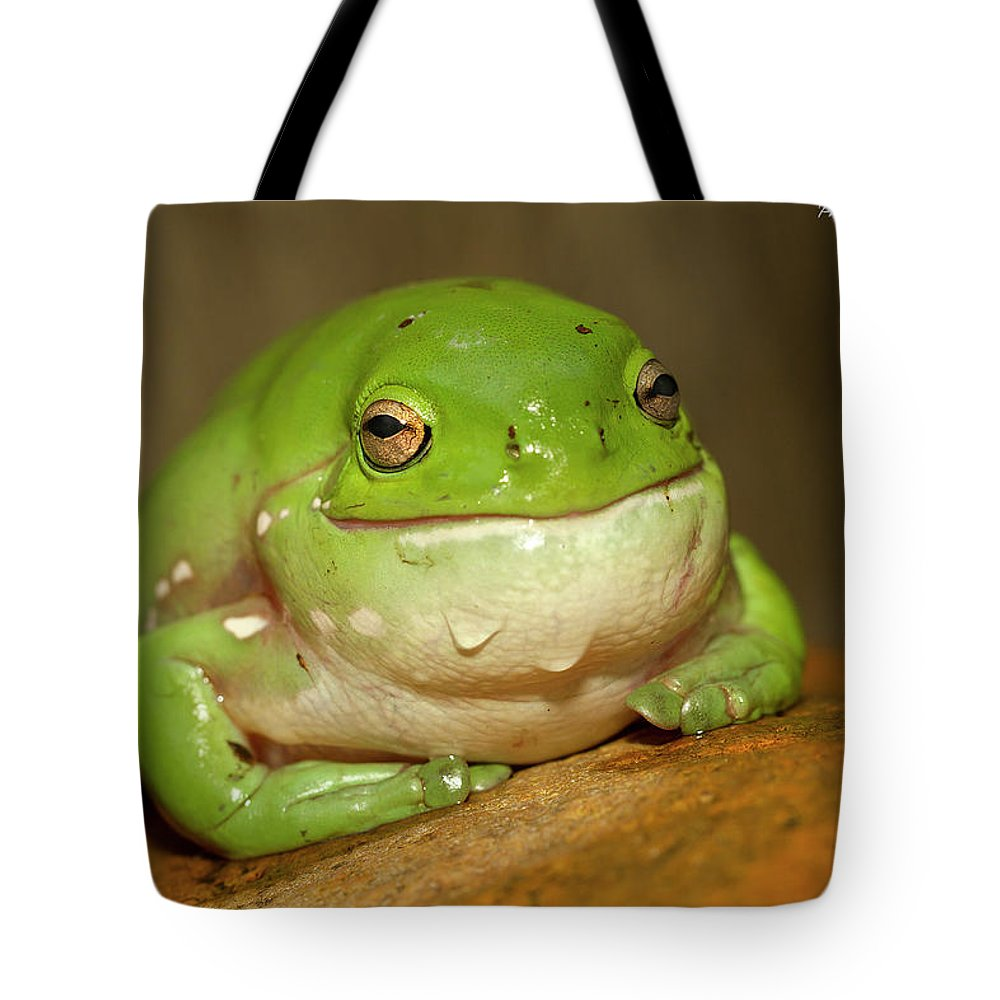 Stickers Decal Happy Frog 20 13416