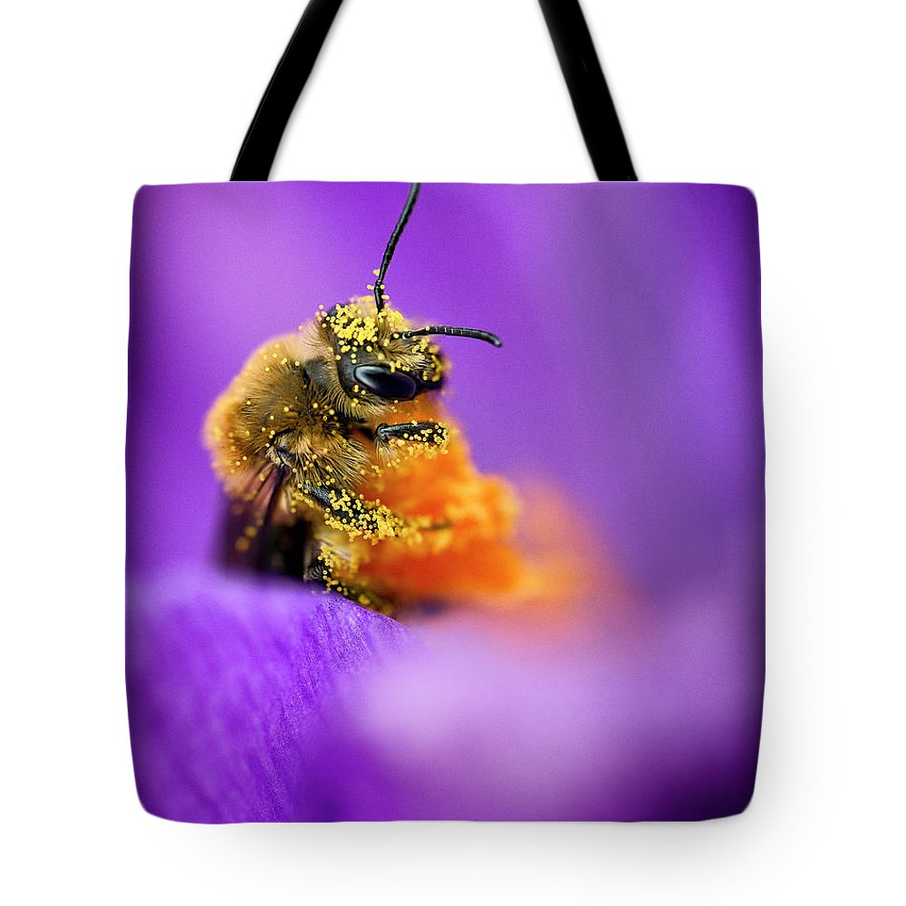 3scape Tote Bag featuring the photograph Honeybee Pollinating Crocus Flower by Adam Romanowicz