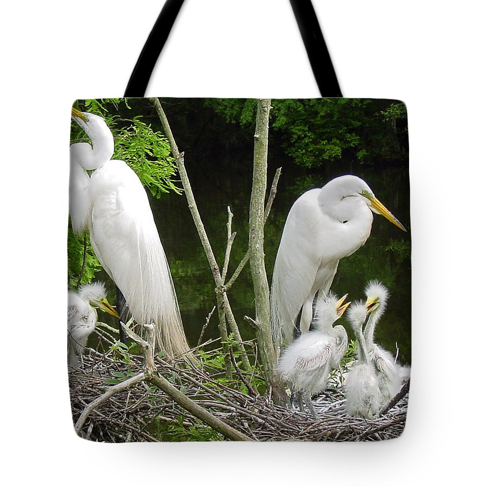 Great White Egret Tote Bag featuring the photograph Mom n Pop n Chicks by Suzanne Gaff