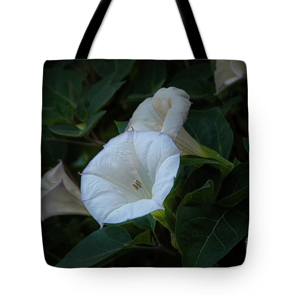 Botanic Gardens Tote Bag featuring the photograph Moonlight Flower by Marilyn Cornwell