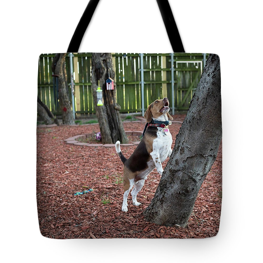 Dog Tote Bag featuring the photograph My Yard by C Winslow Shafer