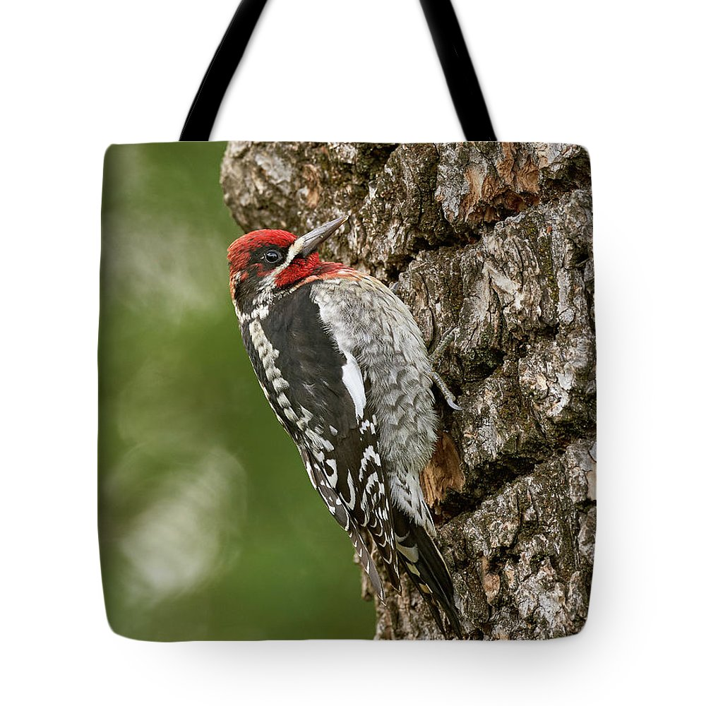 Birds Tote Bag featuring the photograph Red-breasted Sapsucker, Sacramento County California by Doug Herr
