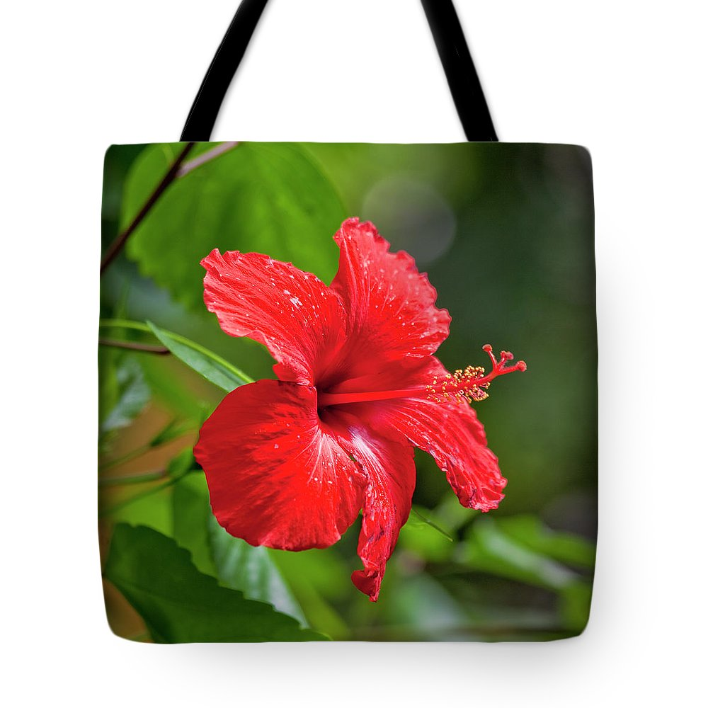 Hibiscus Tote Bag featuring the photograph Red Hibiscus Rosemallow by Trevor Slauenwhite