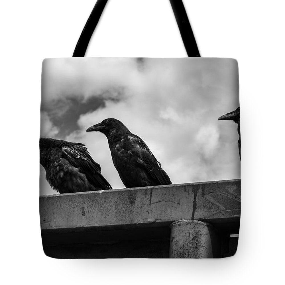 Three Tote Bag featuring the photograph Three Crows 2 by Damon Dulewich