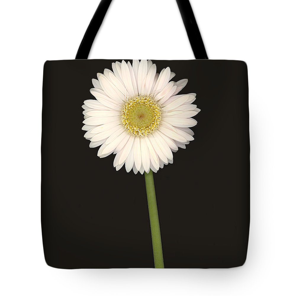 Gerbera Daisy Tote Bag featuring the photograph White Gerbera Series I by Suzanne Gaff