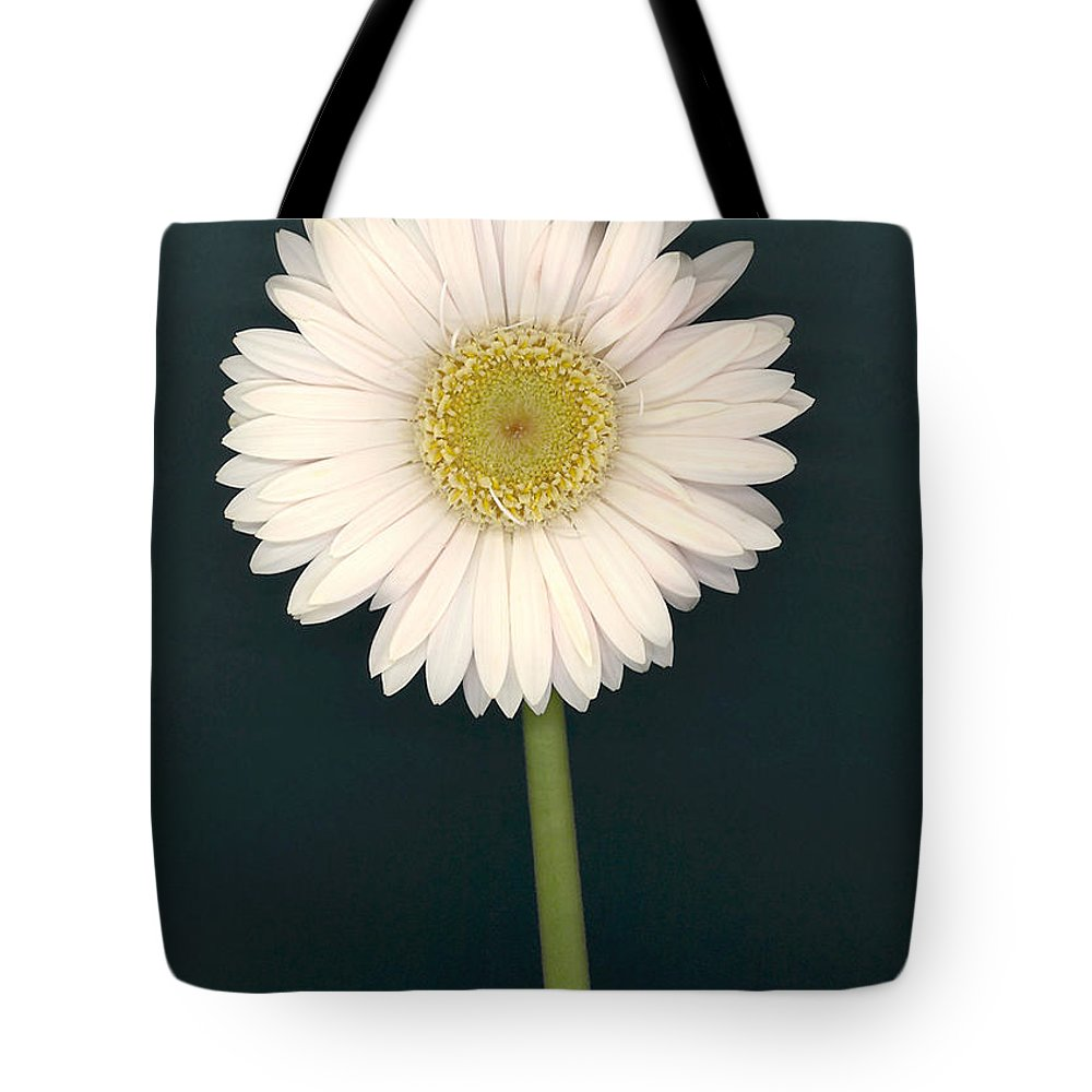 White Gerbera Daisy Tote Bag featuring the photograph White Gerbera Series II by Suzanne Gaff