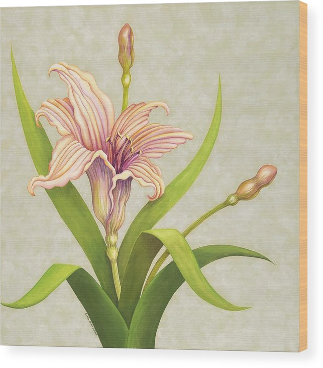 Soft Peach Lily In A Pose Wood Print featuring the painting Peach Lily by Carol Sabo