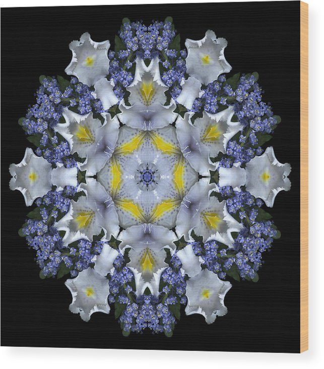 Mandala; Floral; Botanical; Scanner Photography; Scanography;ceanothus; Blue; White; Green; Leaves; Wood Print featuring the photograph Ceanothus Iris Medley 1 by Marsha Tudor