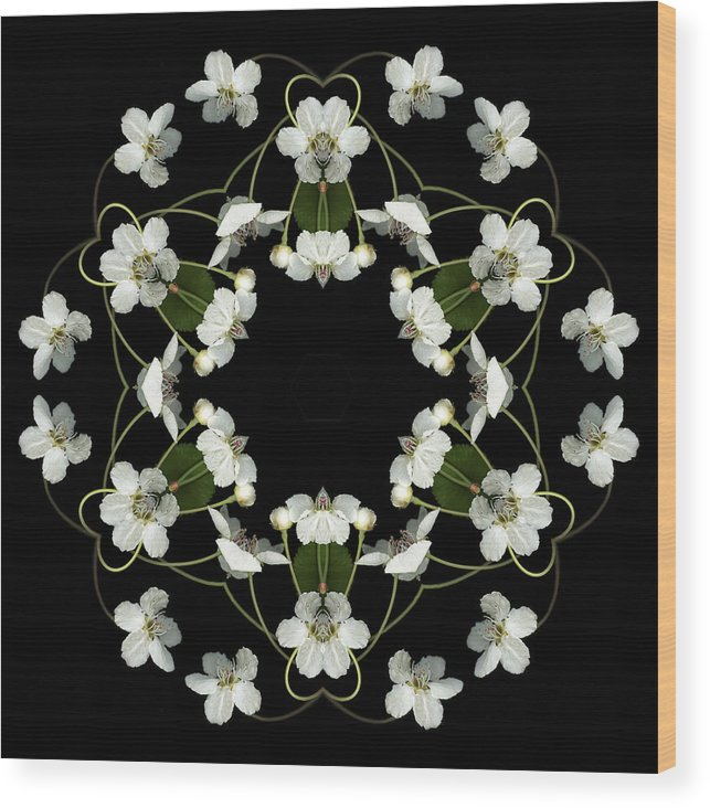 Mandala; Floral; Botanical; Scanner Photography; Scanography; Pear Blossoms; White; Leaves; Wood Print featuring the photograph Orbits by Marsha Tudor