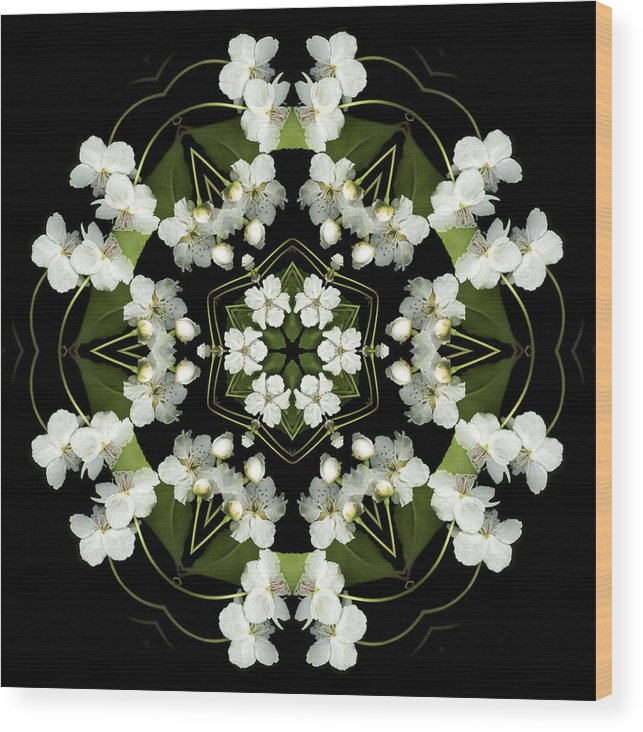 Mandala; Floral; Botanical; Scanner Photography; Scanography; Pear Blossoms Wood Print featuring the photograph Ruffles by Marsha Tudor
