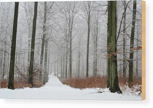 Branch Wood Print featuring the photograph Forest In Winter by Jean Schweitzer