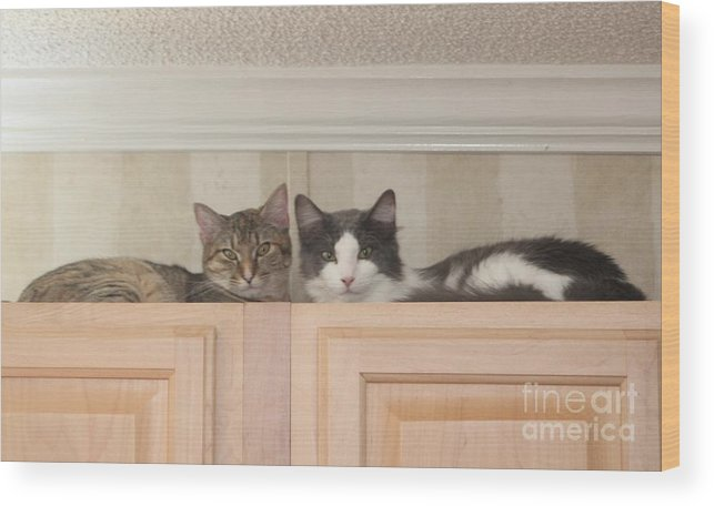 Cat Wood Print featuring the photograph Love Cats by Michelle Powell