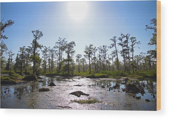 Gothic Wood Print featuring the photograph New Orleans Swamp Untouched by Joseph Semary