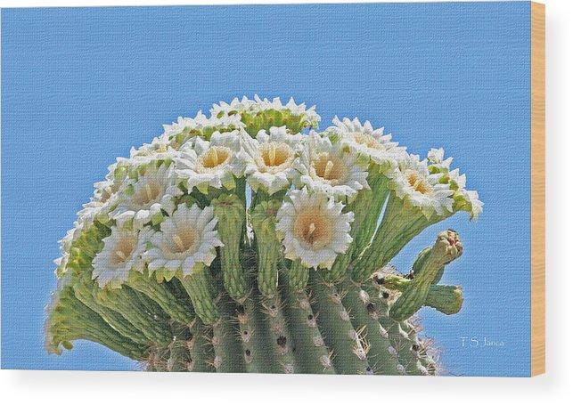 Saguaro Flowers On Top Wood Print featuring the photograph Saguaro Flowers On Top by Tom Janca