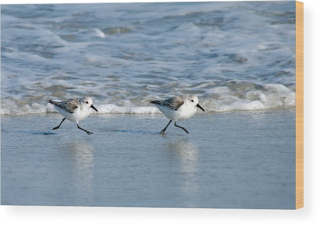 Ocean Wood Print featuring the photograph Two Step by Greg Graham