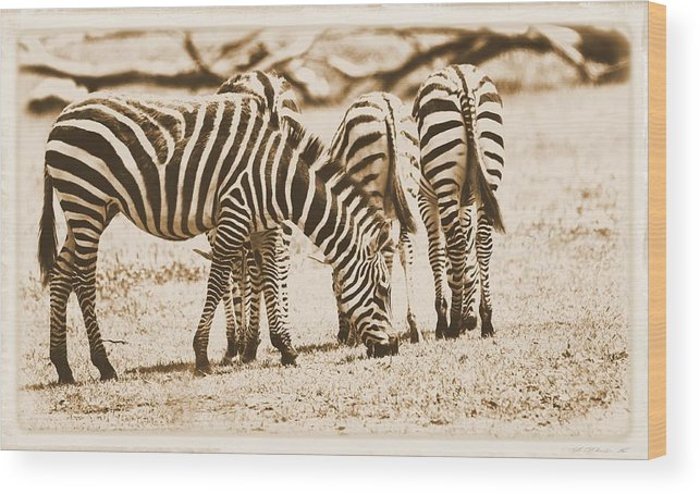 Vintage Zebras Wood Print featuring the photograph Vintage Zebras by Dan Sproul
